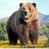 大熊的舞步