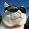 Uncle cat_11